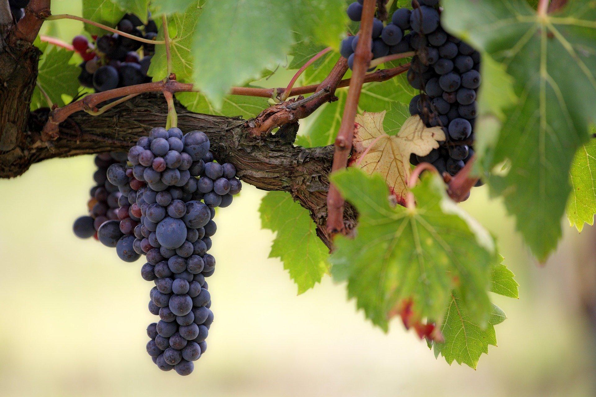vigne métier vin